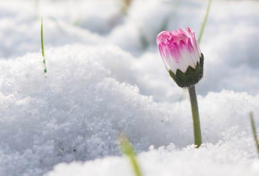 Primavera di Gennaio