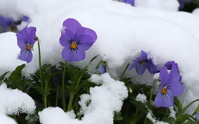 Neve a Marzo