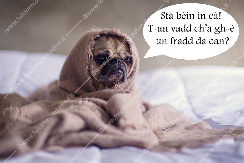 """""""Fradd da can"""", freddo da cani"""