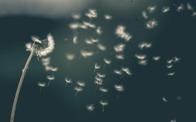 Il significato paranormale del vento