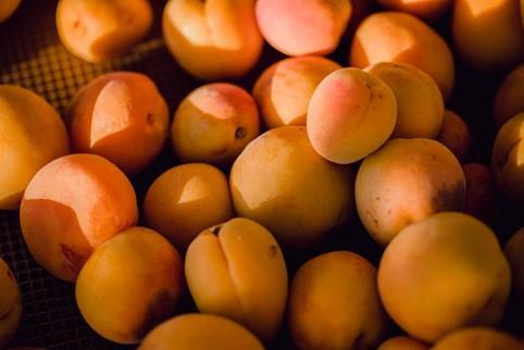 Da dove deriva il termine Mugnêga (albicocca)?